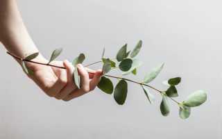 Заусенцы — как удалить, уход и профилактика