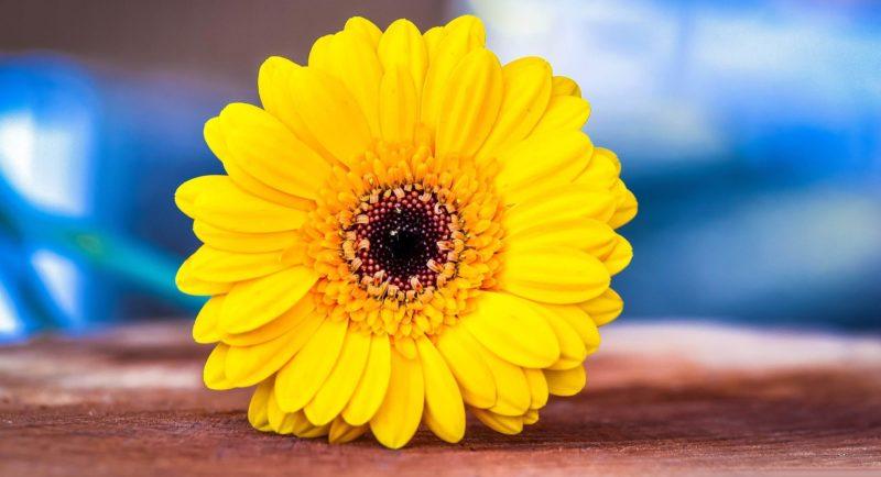 Какие есть оттенки желтого цвета