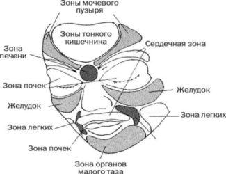 Области лица, отвечающие за конкретный внутренний орган