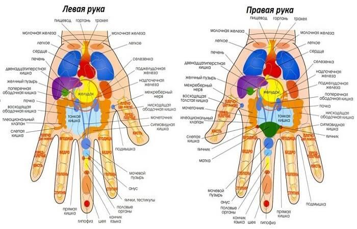 Связь точек на руках с органами