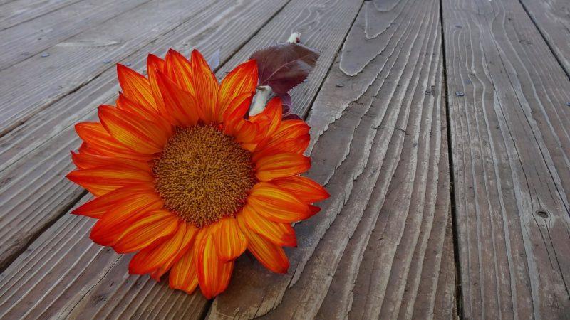 Оттенки и сочетания оранжевого