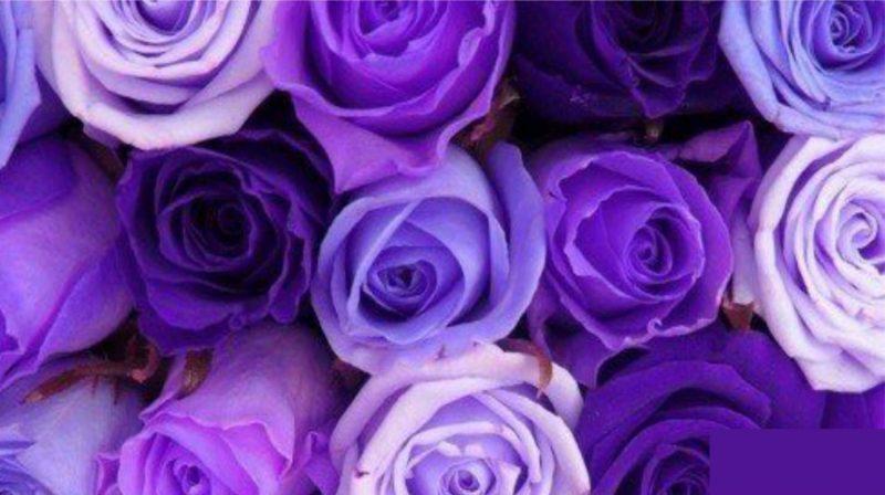 Какие бывают оттенки фиолетового цвета